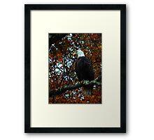 Catskill Eagle Framed Print