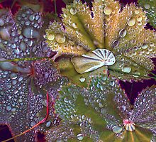 Colour manipulated raindrops on leaves  by Hugh McKean