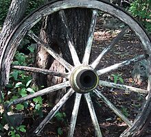 White Wagon Wheel by PicsbyJody