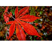 Still Attached to Autumn Photographic Print