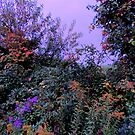 The Hedgerow in Autumn at Dusk by TrendleEllwood