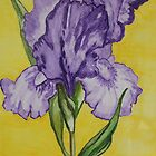 Purple Iris by Wendy Sinclair