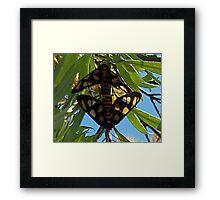Paired Butterflies Framed Print
