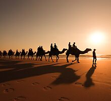 Camel Prints by Sandra Anderson