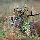 Crown of bracken by Gary Richardson
