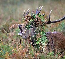 Crown of bracken by Gary Richardson