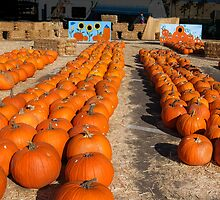 Pumpkin Patch! by heatherfriedman