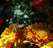 Bee On Mums by WildestArt