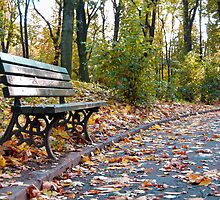 A wooden bench on a park alley by wildrain