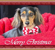 A very doxie Christmas 9 by Sarah Guiton