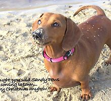 A very doxie Christmas 14 by Sarah Guiton
