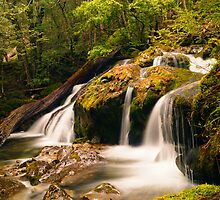 Cascade on Mother Cummings Rivulet, northern Tasmania by Nic Haygarth