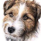 Furry Friends - Pet Portraits by Nicole Zeug by Nicole Zeug
