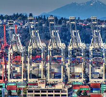 Puget Sound Cranes by Sue Morgan
