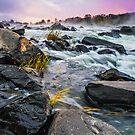 Renewal - Great Falls, VA by Matthew Kocin