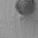 Gastropoda in Black & White by M-EK