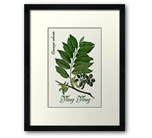 Botanical illustration of Ylang Ylang Framed Print