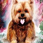 Yala the Yorkshire Terrier by Studio8107