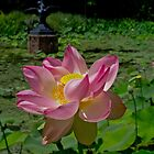 Lotus (Open) by sedge808