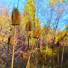 Prickly Plants by Tracy Jones