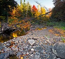 Fallen Tree During Fall Foliage by Nazareth