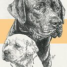 Labrador Retriever Father & Son by BarbBarcikKeith