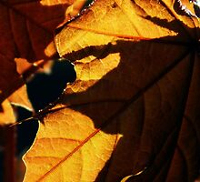 autumns last leaf~ by Brandi Burdick