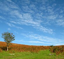 Dartmoor Sky by Vansittart