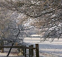 A frosty orchard by Judi Lion
