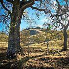 Oaks by Denise Baker