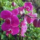 Purple orchids by Dulcina