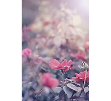Because I Love You Photographic Print