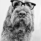 Brown Roan Italian Spinone wearing Glasses by heidiannemorris