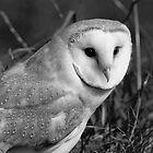 Barn Owl (Tyto alba) by ChrisMillsPhoto