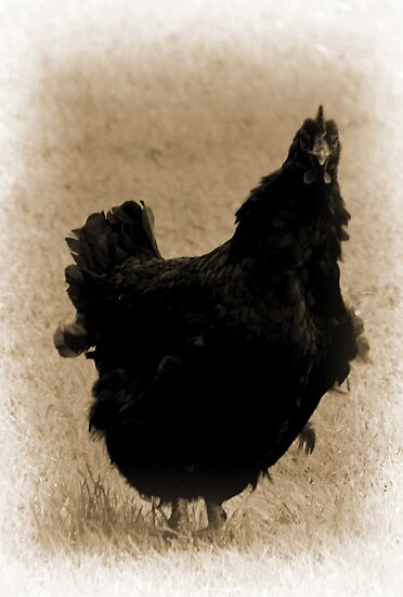 Black Hen by lynn carter