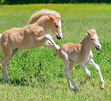 Haflinger foals romp about by Katho Menden