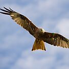 Red Kite by Jon Lees