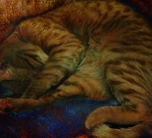 study of a sleeping cat by vigor