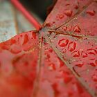Leaf Droplets by Danielle LaBerge
