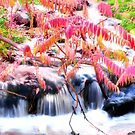 Autumn Falls in Pink by Brenda Dahl