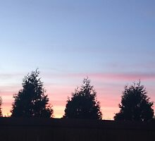 A tree lined sunset by helenpartlow