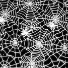 Spider Web by rapplatt