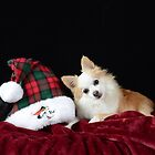 Christmas Dog by philw