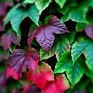 Autumn Colours... by 242Digital