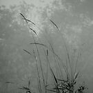 Misty Weeds by WildThingPhotos