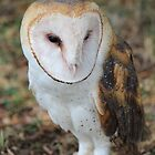 Unique markings of a Barn Owl by Brenda Roy