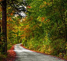 Road to Pruitt Landing by Lisa G. Putman