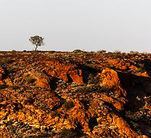 Breakaways one tree by hoboroad