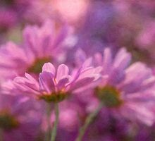 Pink mums for autumn by Celeste Mookherjee