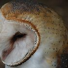 Edgar Barn Owl by Brenda Roy